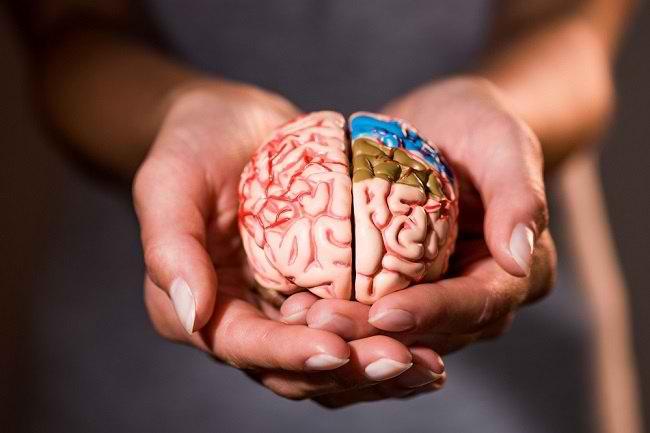 Mengenal Bagian Otak Dan Fungsinya Bagi Tubuh Alodokter