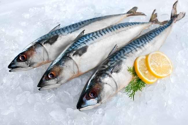 Jangan Lewatkan Beragam Manfaat Ikan Tongkol Untuk Kesehatan Anda Alodokter